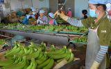 Mỹ - Trung ăn miếng trả miếng: Hàng Việt bị vạ lây