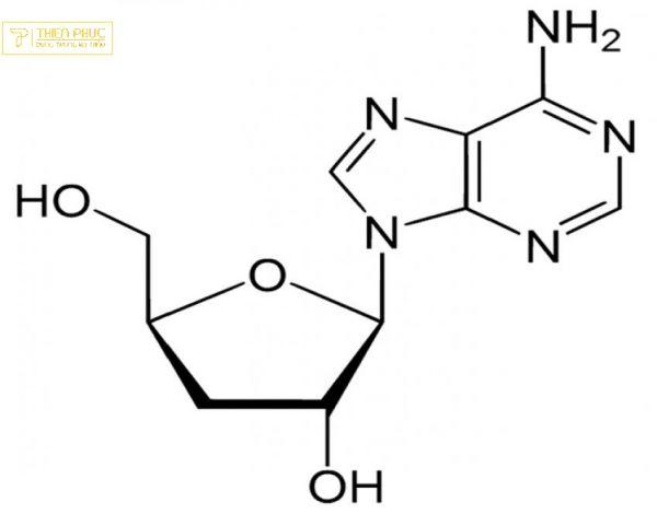 đông trùng hạ thảo ngăn ngừa ung thư