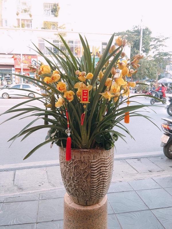 Loài hoa được ưa chuộng nhất dịp Tết Canh Tý 2020