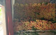 Mùa vải Bắc Giang đại thành công, chắc chắn vượt 6.800 tỷ đồng