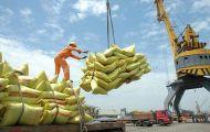 Xuất khẩu gạo sụt giảm mạnh