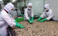 Xuất khẩu tôm sang Australia tăng 93%