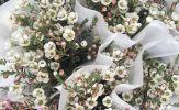 Vẻ đẹp của hoa thanh liễu - Loài hoa hot nhất tết 2018