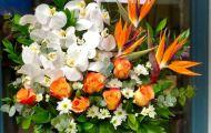 Top 5 loại hoa