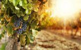 Khám phá rượu vang Italy – Đẳng cấp, tinh tuý từ đất nước thơ mộng
