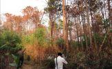 Phá rừng chiếm đất - Thách thức trong quản lý rừng Tây Nguyên