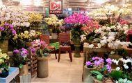 Thêm một địa chỉ chọn lựa hoa sang - sành - nghệ thuật tại Hà Nội
