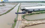 Thuỷ sản Bảo Minh: Đơn vị cung cấp giống thuỷ hải sản chất lượng hàng đầu Việt Nam