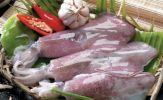 Món ngon - Thuốc quý từ cá mực