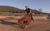 Chú ngựa làm biếng nhất thế giới, cứ ai xông lên đòi cưỡi là lăn ra giả chết