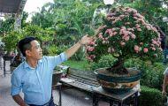 Cận cảnh cây hoa trang đột biến sắc hồng giá gần nửa tỷ, chủ nhân quý hơn vàng