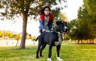Cần vaccine COVID-19 cho thú cưng để ngừa lây sang người?