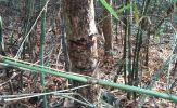 Vụ phá rừng khủng: